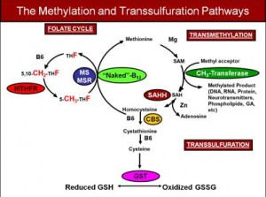 Methylation-and-Transsulfuration-Pathways