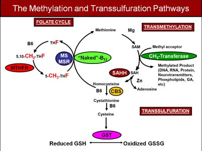 http://www.keefeclinic.com/wp/wp-content/uploads/2013/09/Methylation-and-Transsulfuration-Pathways.jpg