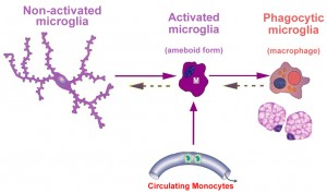 microglial activation3wDr. Keefe, Keefe Clinic. Tulsa Chiropractor, pain, natural health care.
